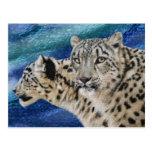Snow Leopard Habitat Postcards