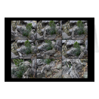 Snow Leopard Hunting Lessons collage Card