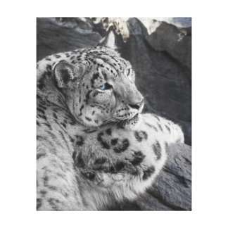 Snow Leopard Icy Stare Canvas Print