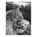 Snow Leopard Icy Stare Postcard