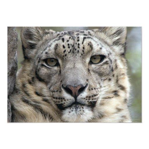Snow Leopard Invitation