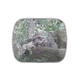 Snow Leopard Jelly Belly Tin