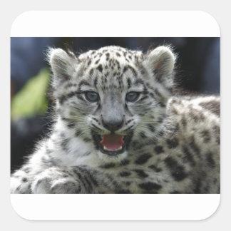 Snow Leopard Kitten Square Sticker