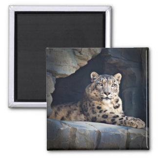 Snow Leopard 2 Inch Square Magnet