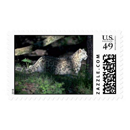 Snow leopard on brushy hillside postage stamp