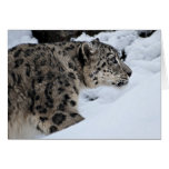 Snow Leopard on the Prowl Card