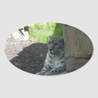 Snow Leopard Oval Sticker
