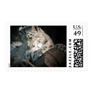 Snow Leopard - Perched Postage