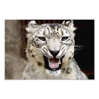 snow leopard photo print