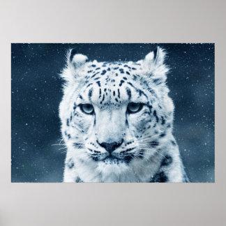 Snow Leopard Portrait Animals Wild Cats Poster