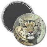 Snow Leopard Portrait Magnet