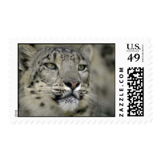 Snow Leopard Postage