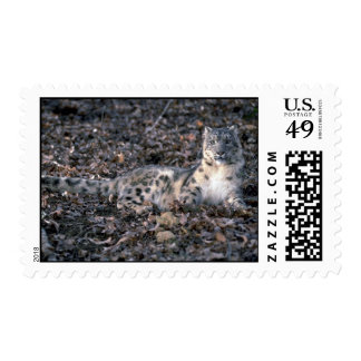 Snow leopard postage stamps