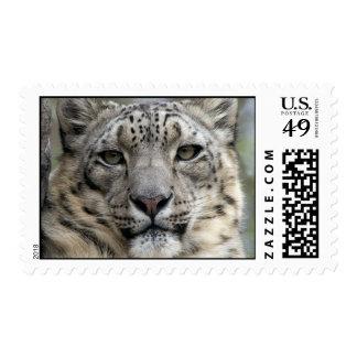 Snow Leopard Postage Stamp