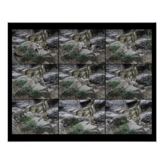 Snow Leopard Pounce Lessons collage Poster
