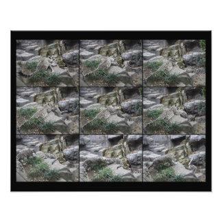 Snow Leopard Pounce Lessons collage print Photo Art