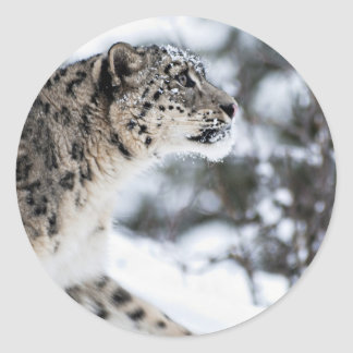 Snow Leopard Profile Classic Round Sticker