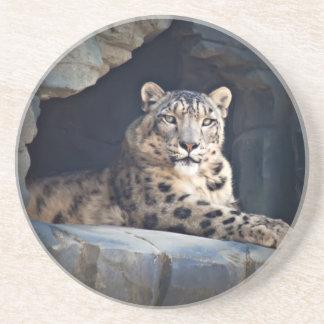 Snow Leopard Sandstone Coaster