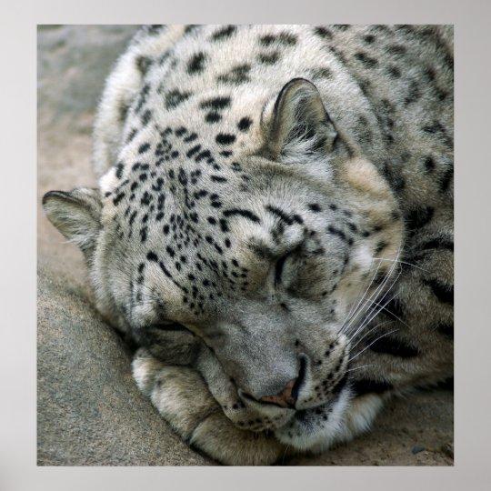 Snow Leopard - Sweet Dreams Poster