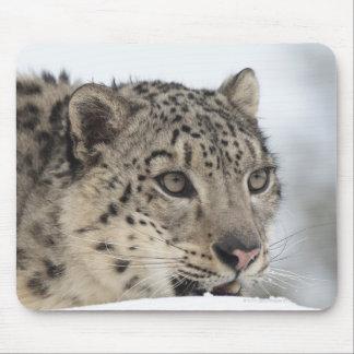 Snow leopard (Uncia uncia) 2 Mouse Pad