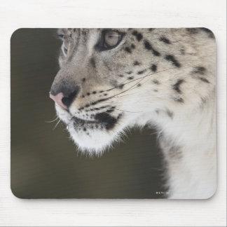Snow leopard (Uncia uncia) Mouse Pad