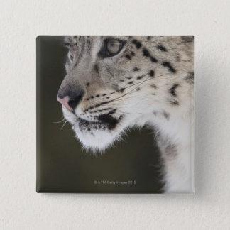 Snow leopard (Uncia uncia) Pinback Button