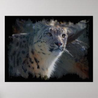 Snow Leopard Wild Cat Animal Lover Poster