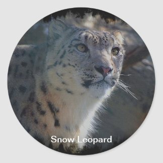 Snow Leopard Wild Cat Animal Lover Stickers