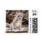 Snow Leopard Wildlife Postage Stamp