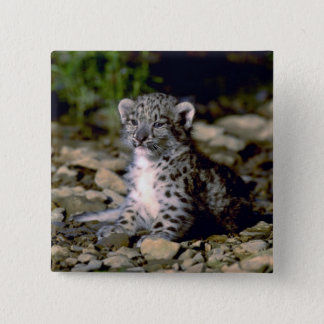 Snow leopard, young cub button