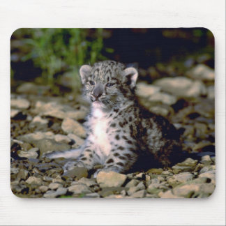 Snow leopard, young cub mouse pad
