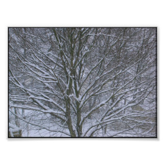 snow lines branches photo