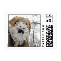 Snow Lucy Stamp