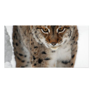 Snow Lynx Card