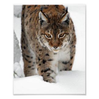 Snow Lynx Photo Print