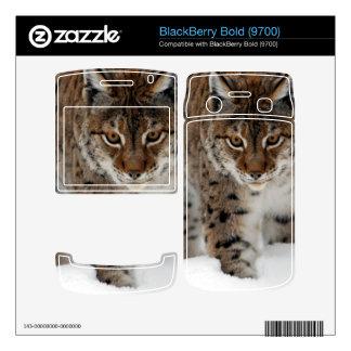 Snow Lynx BlackBerry Bold Decal