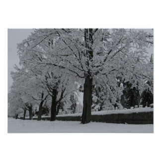 Snow maples poster