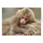 Snow Monkey Baby, Jigokudani, Nagano, Japan 2 Greeting Card