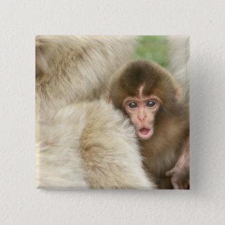 Snow Monkey Baby, Jigokudani, Nagano, Japan Button