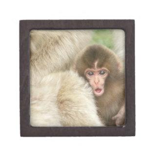 Snow Monkey Baby, Jigokudani, Nagano, Japan Gift Box