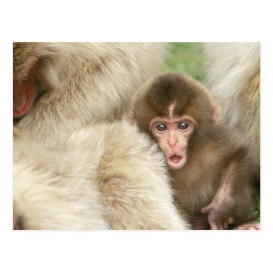 Snow Monkey Baby, Jigokudani, Nagano, Japan Postcard