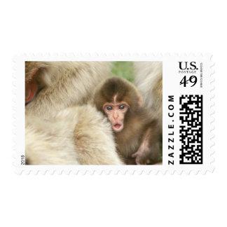 Snow Monkey Baby, Jigokudani, Nagano, Japan Stamp