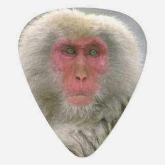 Snow Monkey Couple, Japanese Macaque, Guitar Pick