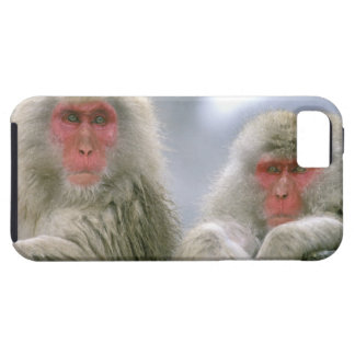 Snow Monkey Couple, Japanese Macaque, iPhone SE/5/5s Case