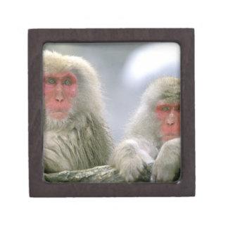 Snow Monkey Couple, Japanese Macaque, Keepsake Box