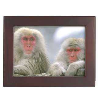 Snow Monkey Couple, Japanese Macaque, Memory Box