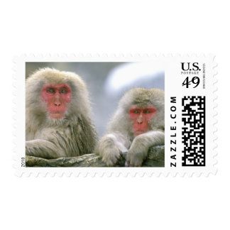 Snow Monkey Couple, Japanese Macaque, Postage Stamp