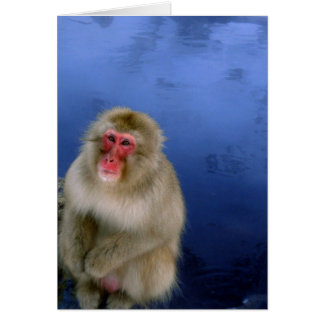 Snow Monkey Greeting Cards