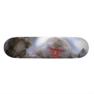 Snow Monkey Mother & Child, Jigokudani, Nagano, Skateboard