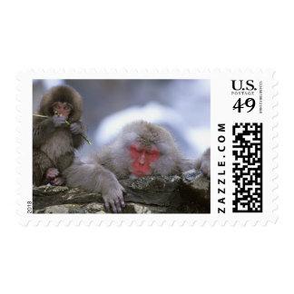 Snow Monkey Mother & Child, Jigokudani, Nagano, Stamp